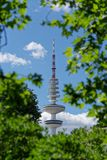 Looking to Hamburg`s television tower. Against blue sky through green tree branches royalty free stock photo