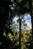 Looking out of a dark mysterious tropical forest into the sunshine in a clearing and a beautiful blue sky with white clouds stock photo