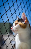 Cat looking out Royalty Free Stock Image