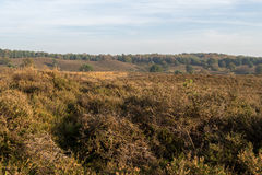 Looking out over Dutch heathland Royalty Free Stock Photo