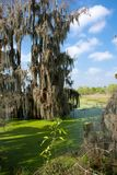 A green cypress Swamp with a blue sky. Stock Images