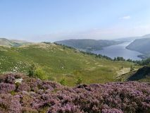 Looking over heather to Ullswater, Lake District Stock Photography