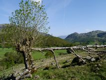 Looking over long horizontal branch to Borrowdale Stock Photography