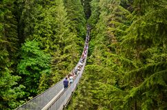 Free Looking Over The Large Suspension Walk Bridge In Capilano Vancouver.Vancouver, Canada / 23-05-2018 Stock Image - 183464151