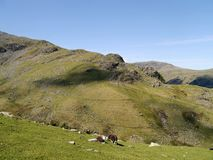 Looking over to Thornythwaite Fell, Borrowdale Fells Royalty Free Stock Photography