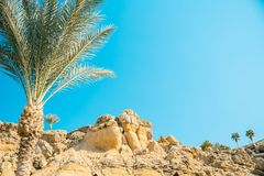 Looking through palm leaves at the picturesque dream beach with white sand, golden granite rocks, palm trees and a blue sky. Egypt Royalty Free Stock Images