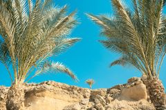 Looking through palm leaves at the picturesque dream beach with white sand, golden granite rocks, palm trees and a blue sky. Egypt Royalty Free Stock Photo