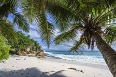 Palm trees on paradise beach at anse patates, la digue, seychell Stock Photo