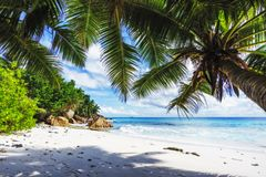 Palm trees on paradise beach at anse patates, la digue, seychell Stock Photos