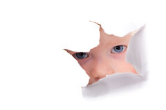 Looking through paper hole. Cute little girl looking through paper hole Royalty Free Stock Images