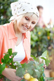 Looking after plants Stock Image