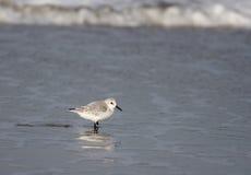 Looking into the sea. A photo of a flying bird stock photos