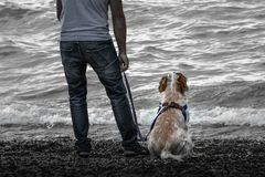 Looking the sea with the best friend Stock Photo