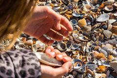 Looking for shells Royalty Free Stock Photos