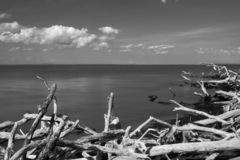 Looking South across the Atlantic Ocean, toward the horizon with driftwood in the foreground, in black & white, Fire stock photography