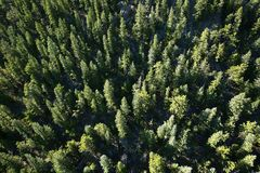 Looking straight down a mountain filled with pine trees. Royalty Free Stock Photography