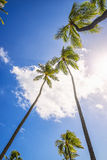Palm Trees, Honolulu, Oahu, Hawaii Stock Image