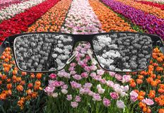 Free Looking Through Glasses To Bleach Nature Landscape - Tulips Field. Color Blindness Royalty Free Stock Photos - 180076918