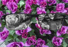 Free Looking Through Glasses To Bleach Tulips Field. Color Blindness. World Perception During Depression. Medical Condition Royalty Free Stock Photography - 182106397