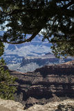 Looking Thru A Tree Canopy The Grand Canyon Stock Photography