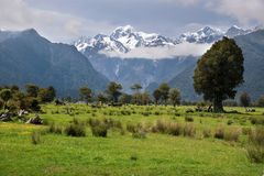 Looking to Mount Cook from Fox village Royalty Free Stock Image