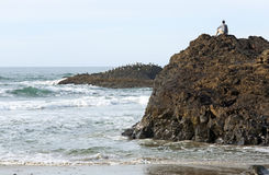 Looking to Nature for Answers. A man sits on the rock outcroppings along the Oregon coast searching the seas for answers Stock Image