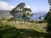Looking to trees on hill. The lake behind is Ullswater, Lake District, England Royalty Free Stock Image