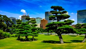 Tokyo Imperial Palace Park stock photography