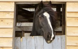 Looking towards freedom. Horse looking out barn door equine Stock Photography