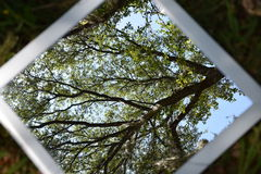 Looking at the trees. Looking at the branches of a tree from a mirror on the ground Royalty Free Stock Images