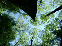 Looking Up. Taking time royalty free stock photography