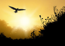 Looking Up A1. Illustration of beautiful bird soaring above silhouetted grassy hill with trees and glowing golden sunrise beyond Stock Images
