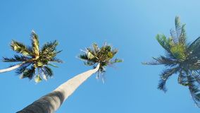 Looking up at amazing palm trees on the background of blue sky, slow motion stock video footage