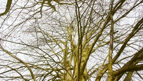 Tall tree with nest version 1 stock photo