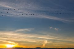 Birds at Sunset. Looking up at birds perched on telegraph wires, with a sunset sky behind stock photos