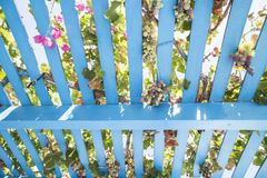 Painted wooden pergola lattice with vines, grapes and pink flowers stock photo