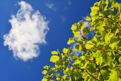 Looking up into the blue sky with one cloud underneath a tree Stock Photography