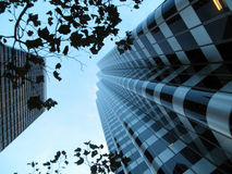 Looking up through branches at modern buildings Stock Image