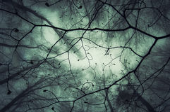 Looking up on branches in a mysterious enchanted forest with fog Stock Photos