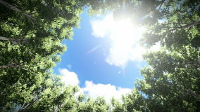 Looking up at a circle of redwood trees, timelapse clouds, zoom in. Hd video stock footage