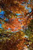 Looking up. Cupola of colors leaves Royalty Free Stock Images