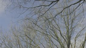 Looking Up while Cycling under Barren Trees in Sunny Winter. Medium wide low angle point of view tracking shot moving below barren trees lit by the sun during a stock video