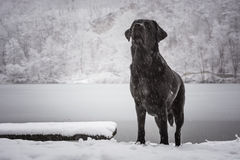 Looking up dog with a frozen lake in the background.  royalty free stock photos