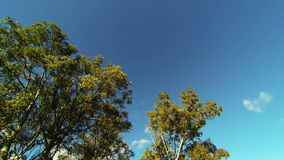 Looking up while driving from road with trees and clouds. Timelapse stock footage