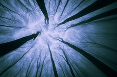 Looking up in a forest with fog trough trees Royalty Free Stock Image