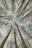Looking up in the forest Royalty Free Stock Photography