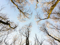 Looking Up In Forest Tree To Sky Stock Images
