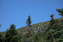 Looking Up Green Mountain Rocky Forest Cliff stock photo