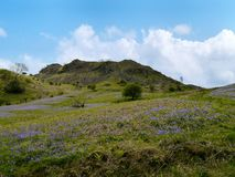 Looking up hill with bluebells Stock Image