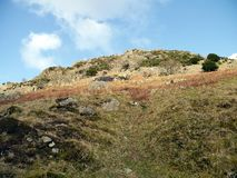 Looking up hill of various attributes. Dubhow Crag area, Lake District Royalty Free Stock Photo